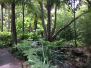 Melbourne city parks walk