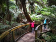 Maits Rest Rainforest Walk, Otway Ranges