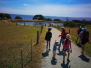 Churchill Island north loop walk, Phillip Island